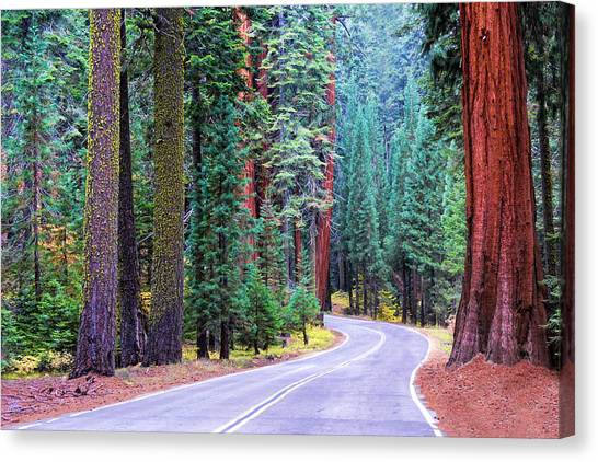 Sequoia Hwy Canvas Print