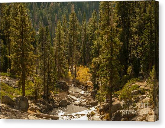 Sequoia National Park  1-7832 Canvas Print