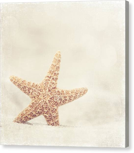 Starfish Canvas Print - Serendipity by Carolyn Cochrane