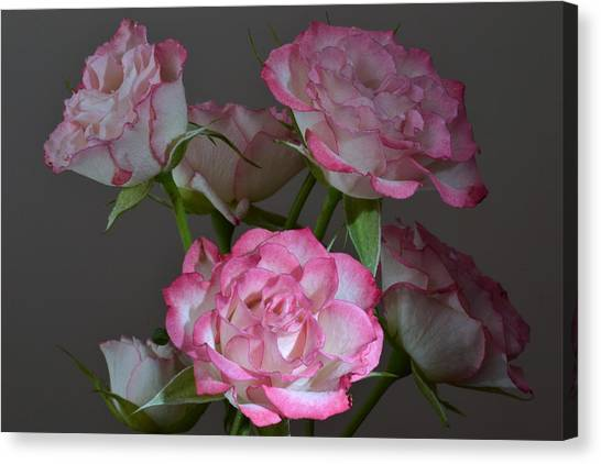 Serene Roses. Canvas Print by Terence Davis