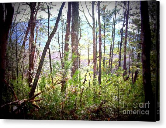 Serene Woodlands Canvas Print