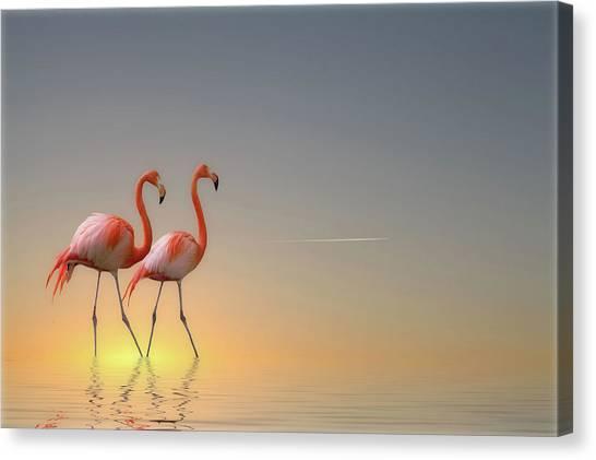 Water Birds Canvas Print - Serenity II by Anna Cseresnjes