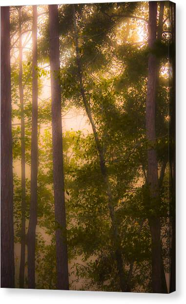 Foggy Forests Canvas Print - Serenity In The Forest by Parker Cunningham