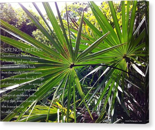 Serenoa Repens Canvas Print by Catherine Favole-Gruber