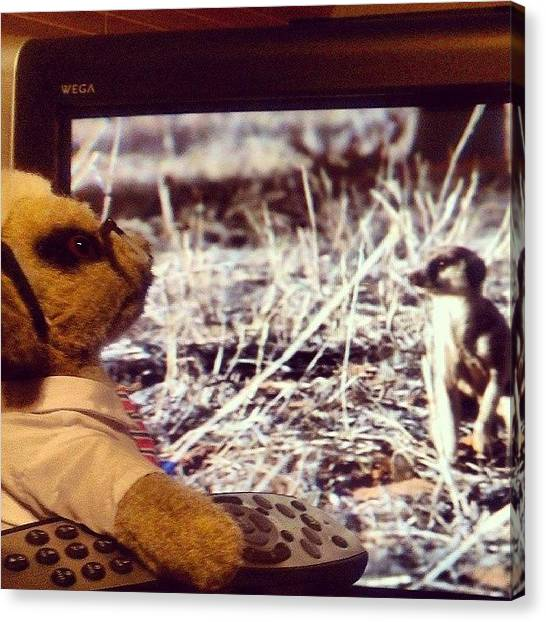 Meerkats Canvas Print - Sergei Watching Some Dodgy Porn On Tv! by Mala Vadgama