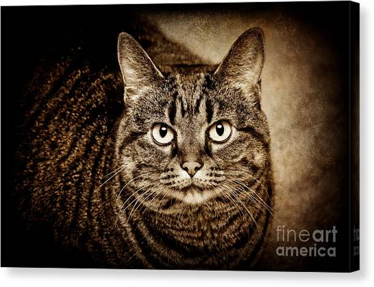 Andee Design Cat Eyes Canvas Print - Serious Tabby Cat by Andee Design