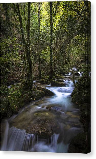 Sesin Stream Near Caaveiro Canvas Print