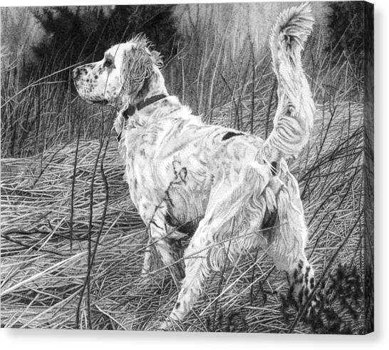 Setter In The Field Canvas Print by Rob Christensen