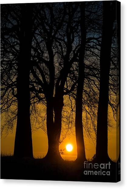 Setting Between The Trees - Wittenham Clumps Canvas Print by OUAP Photography