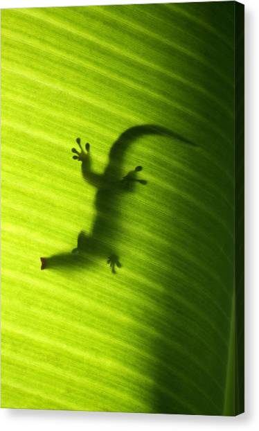 Banana Tree Canvas Print - Seychelles Small Day Gecko by Fabrizio Troiani