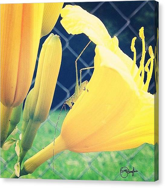 Grasshoppers Canvas Print - Shaded Hopper by Gina ODonoghue
