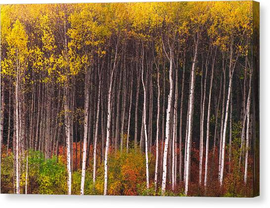 Shades Of Autumn Canvas Print