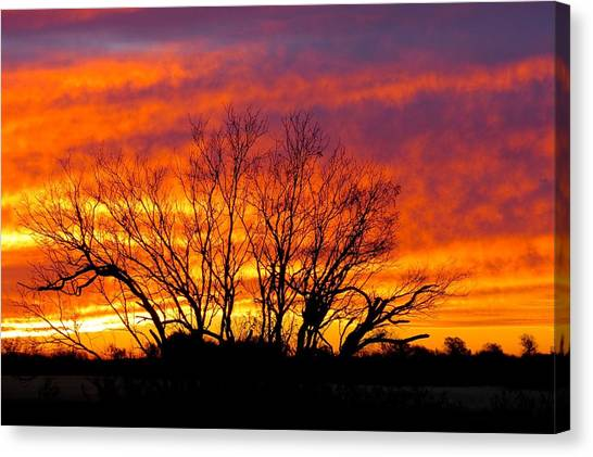 Shades Of Morning Canvas Print