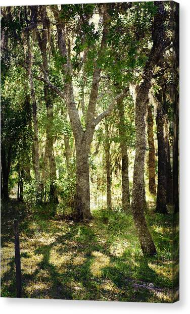 Shadow Forest Canvas Print