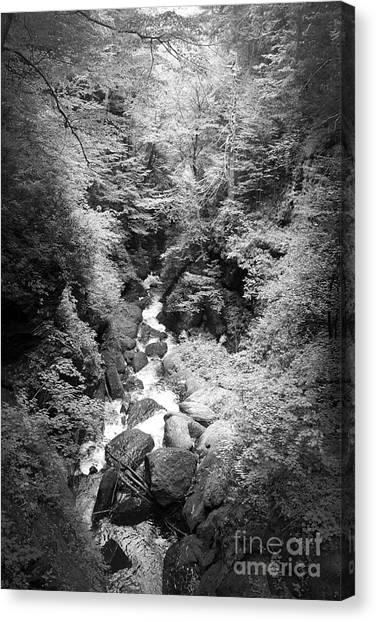 Shadowed Stream Canvas Print