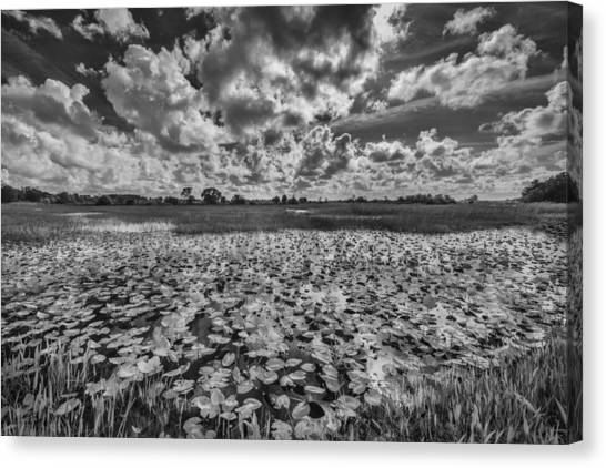 Everglades Canvas Print - Shadows In The Afternoon by Jon Glaser