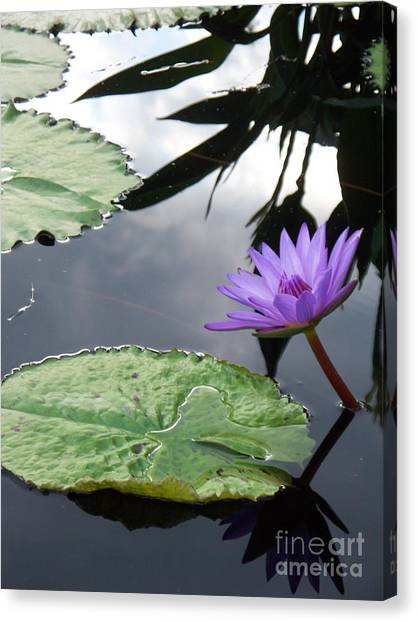 Shadows On A Lily Pond Canvas Print