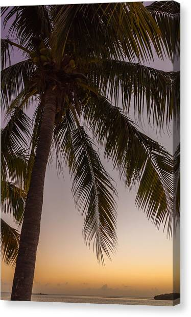 Palm Trees Sunsets Canvas Print - Shady Palm by Kristopher Schoenleber