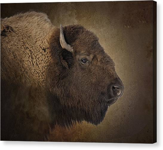 Buffaloes Canvas Print - Shaggy One by Ron  McGinnis