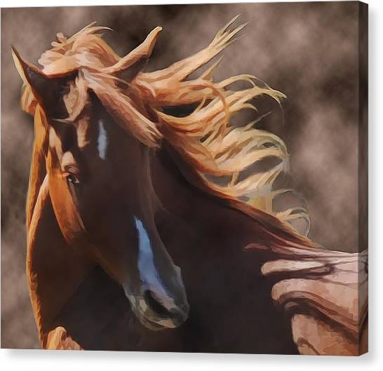 Canvas Print featuring the photograph Shahmaan by Melinda Hughes-Berland