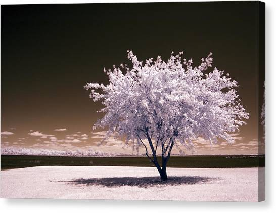 Shaking The Tree Canvas Print