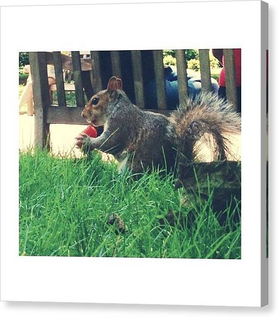 Squirrels Canvas Print - Sharing Strawberries With My Squirrel by Laura  Warrington