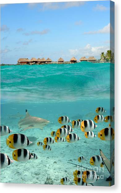 Over-under With Shark And Butterfly Fish At Bora Bora Canvas Print