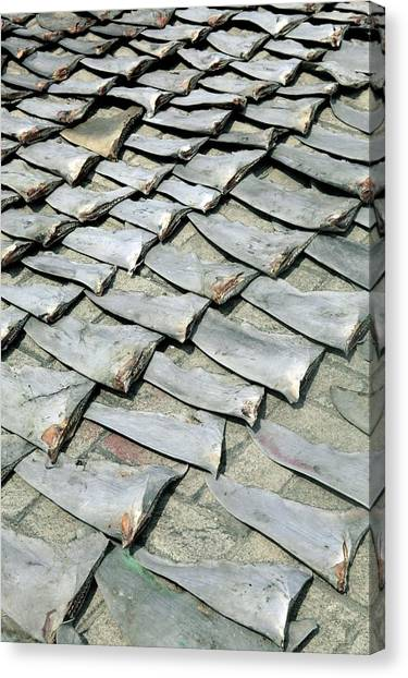 Fish Market Canvas Print - Shark Fins by Tim Lester/science Photo Library