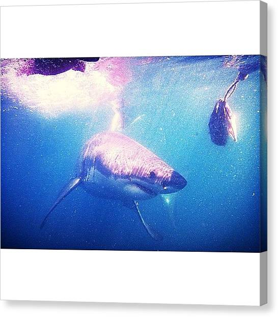 Jaws Canvas Print - Sharkies On The Blog Today! by David Smith