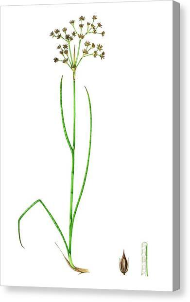 Flower Anatomy Canvas Prints (Page #6 of 14) | Fine Art America