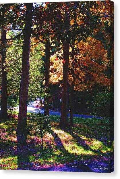 Shawnee Drive Through The Trees Canvas Print by Jeffrey Todd Moore