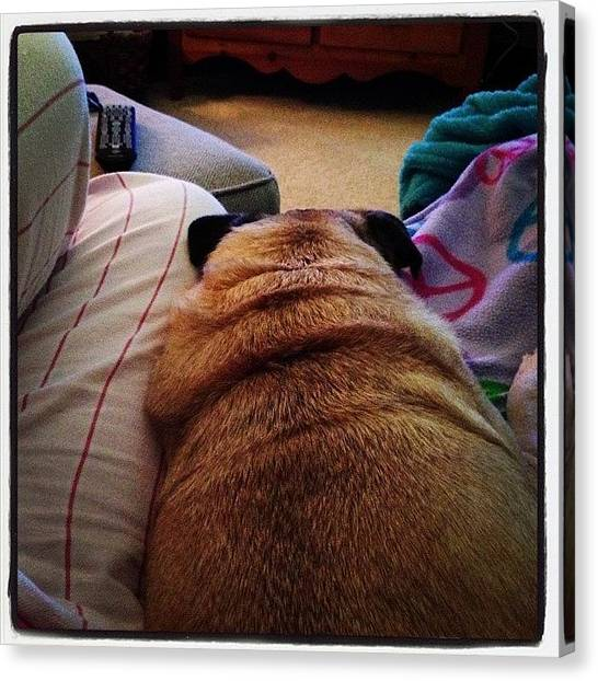 Pugs Canvas Print - She Was So Snug!! But Then I Had To Get by Allison Berger