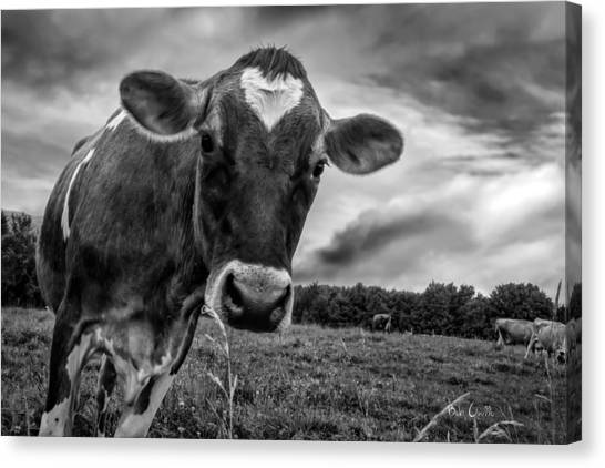 Milk Canvas Print - She Wears Her Heart For All To See by Bob Orsillo