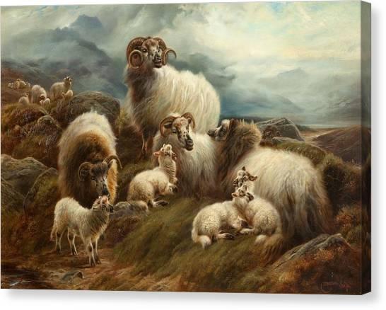 Ewe Canvas Print - Sheep In A Landscape, 1894 by Robert Watson