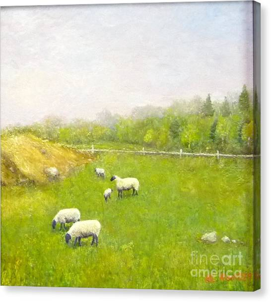Sheep In Pasture Canvas Print