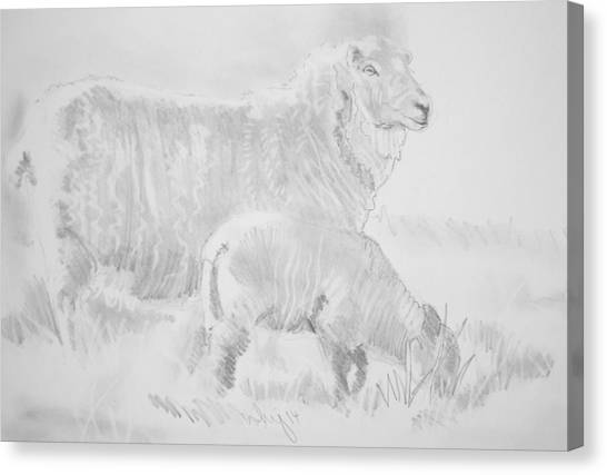 Sheep Lamb Pencil Drawing Canvas Print
