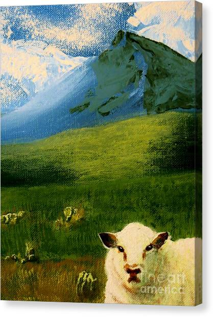 Sheep Looking In Canvas Print