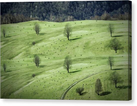Farm Landscape Canvas Print - Sheeps ... by Anna Cseresnjes