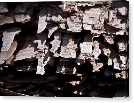 Sheets Of Bark Canvas Print