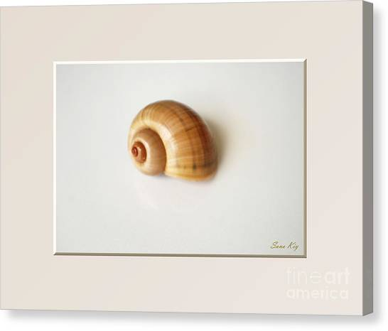 Shell. Delicate Colors Canvas Print