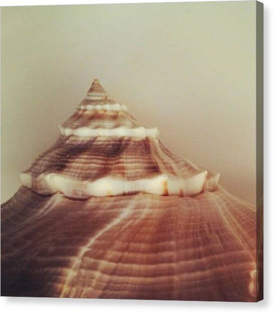 Fibonacci Canvas Print - Shell by Esther Huinink