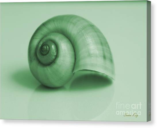 Shell. Light Green Canvas Print
