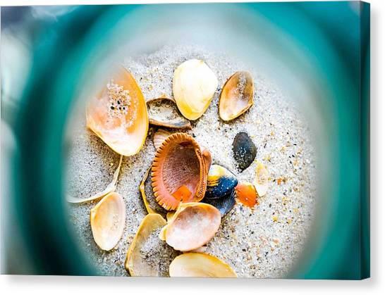 Shell Paradise  Canvas Print