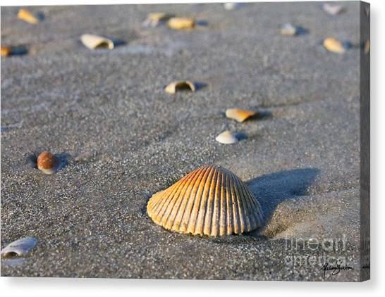 Shells 01 Canvas Print