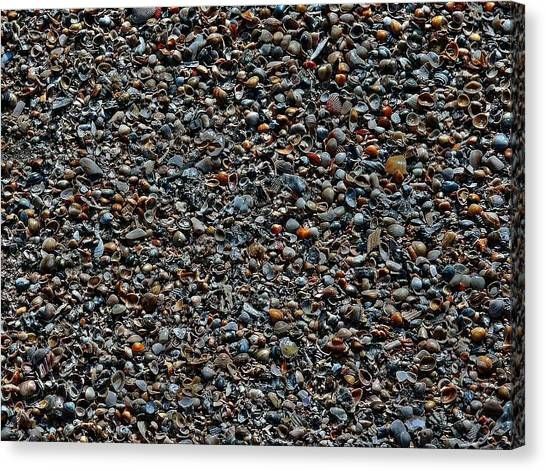 Shells Canvas Print