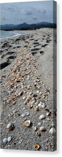Conch Shells Canvas Print - Shells On The Beach, La Cinta Beach by Panoramic Images