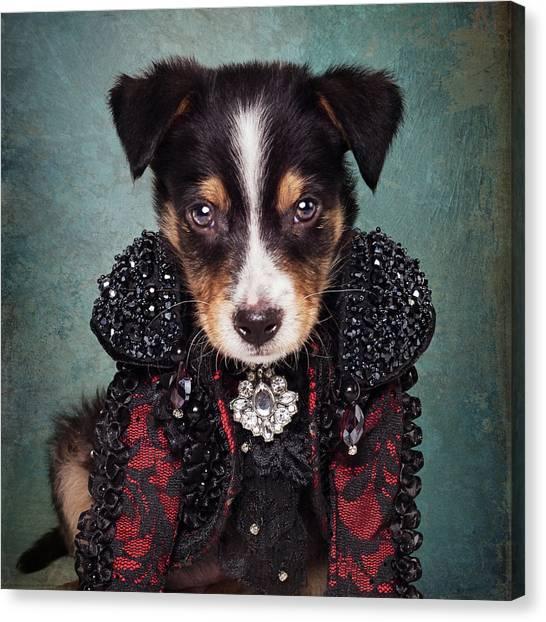 Fineart Canvas Print - Shelter Pets Project - Loki by Tammy Swarek