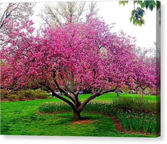 Sherwood Gardens Tree Canvas Print
