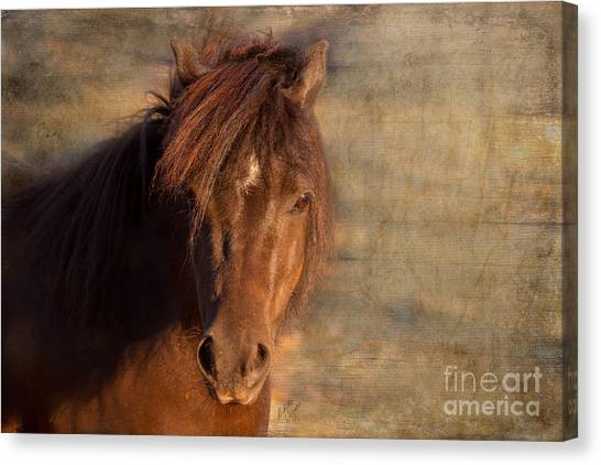 Shetland Pony At Sunset Canvas Print