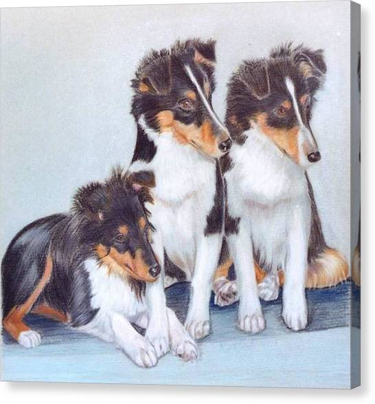 Shetland Sheepdog Puppies Canvas Print